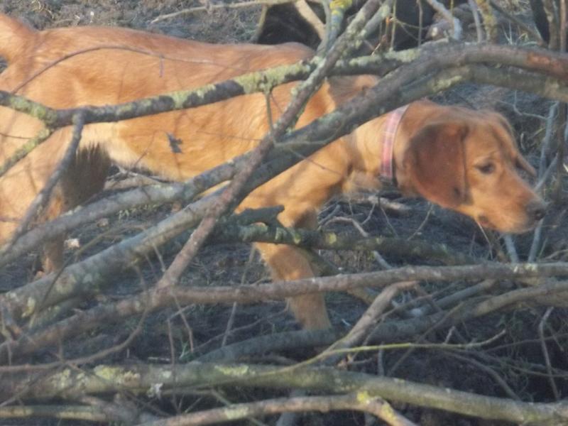 Bildertagebuch - AXEL, ein aufgewecktes Hundekind sucht ein Sofa... - VERMITTELT! 31399942lq