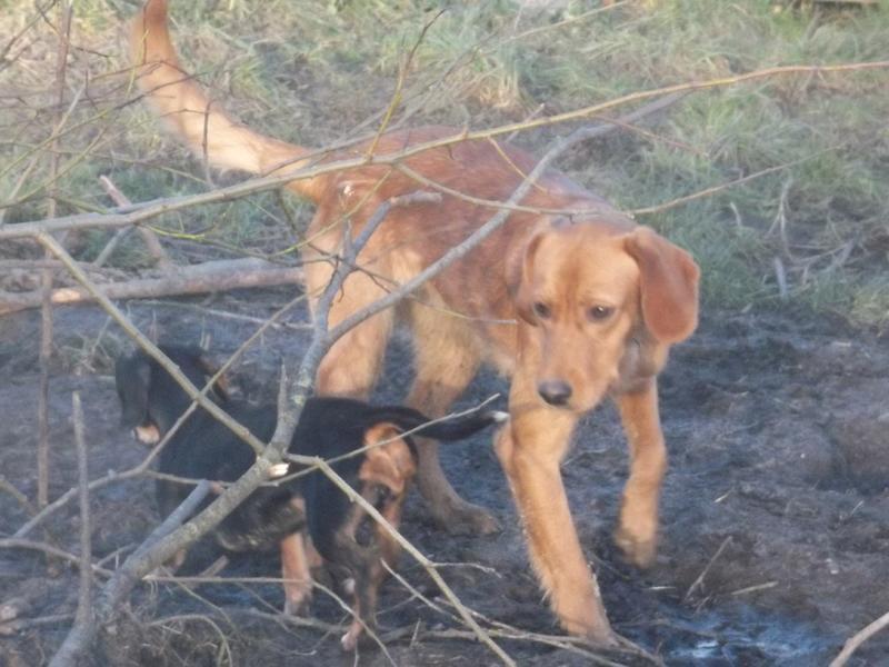 Bildertagebuch - AXEL, ein aufgewecktes Hundekind sucht ein Sofa... - VERMITTELT! 31399943or