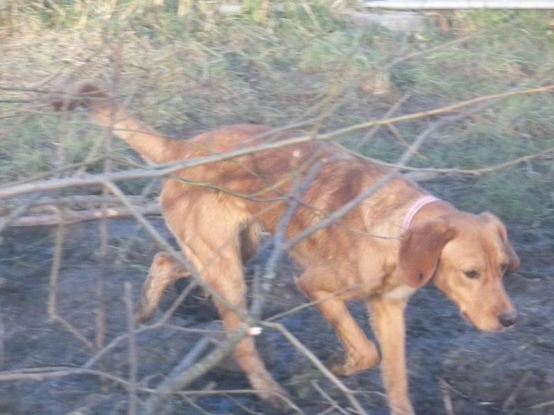 Bildertagebuch - AXEL, ein aufgewecktes Hundekind sucht ein Sofa... - VERMITTELT! 31399944dm