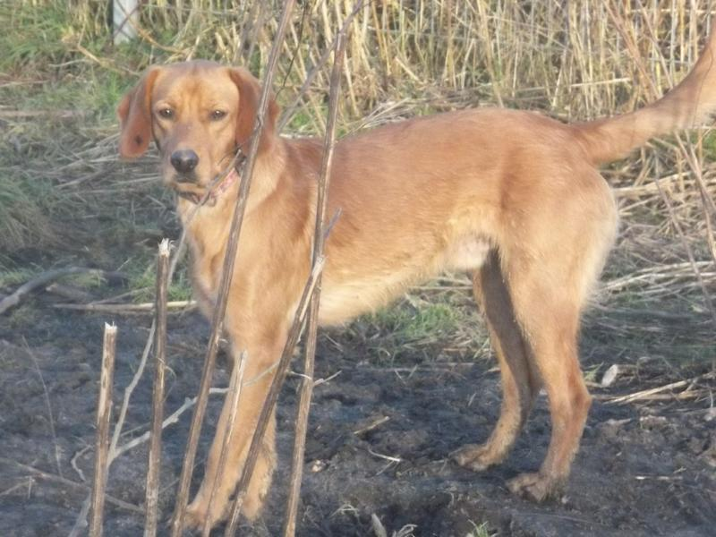 Bildertagebuch - AXEL, ein aufgewecktes Hundekind sucht ein Sofa... - VERMITTELT! 31399945ty