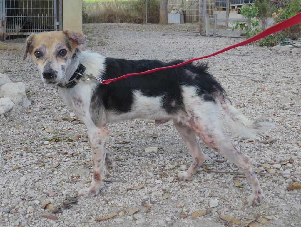 cooper - Bildertagebuch - COOPER darf als Dauerpflegehund auf seiner Pflegestelle bleiben 31422130sq