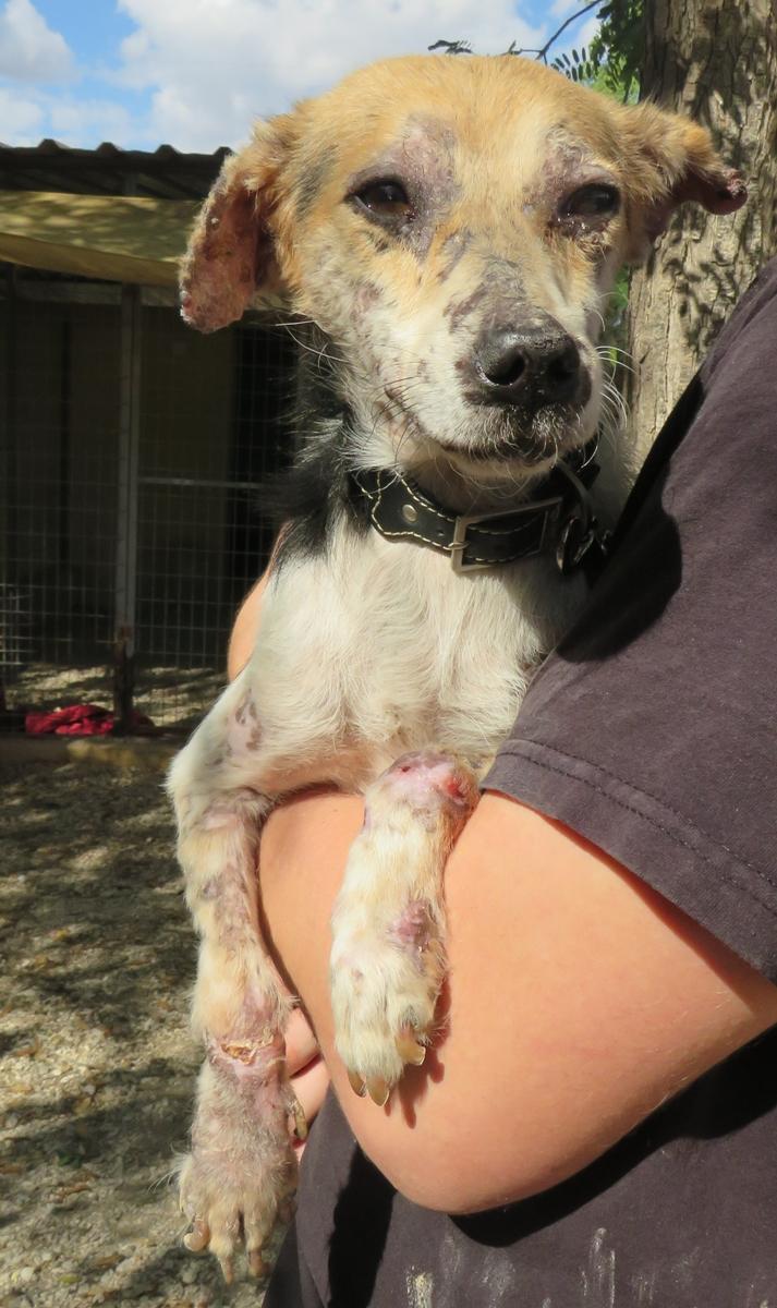 cooper - Bildertagebuch - COOPER darf als Dauerpflegehund auf seiner Pflegestelle bleiben 31422133dl