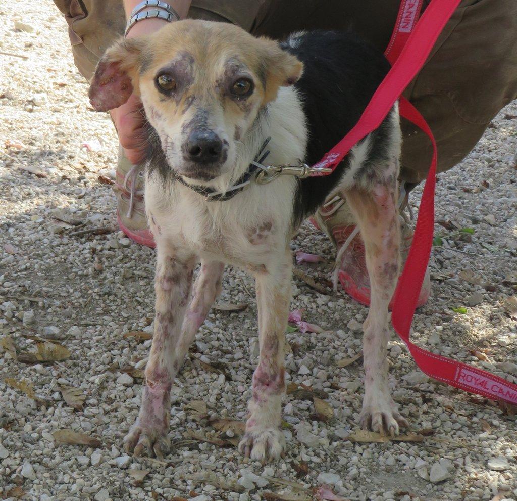 cooper - Bildertagebuch - COOPER darf als Dauerpflegehund auf seiner Pflegestelle bleiben 31422135hs