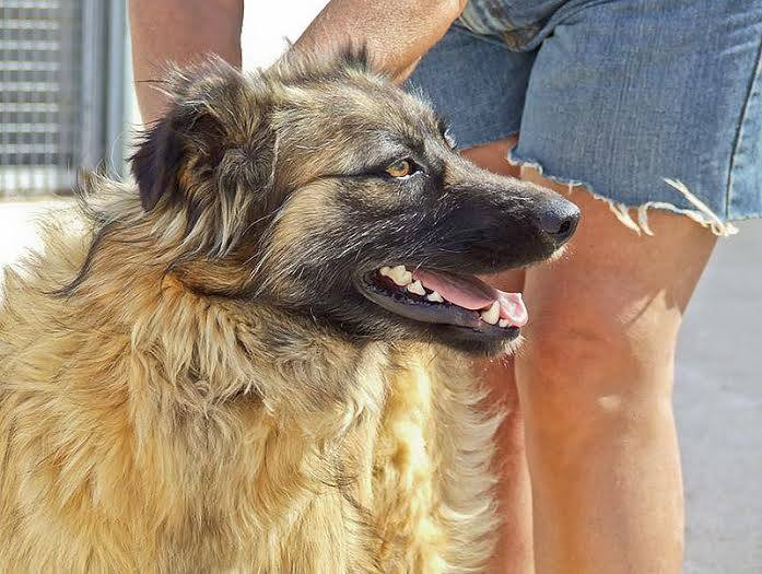 Bildertagebuch - SIRIUS, intelligenter hübscher Hundestern möchte so gerne endlich ein Zuhause - VERMITTELT - 31454073sx