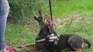 Katica, Schäferhund-Windhund-Mischlingshündin, geb. ca. Mai 2017 31619730ap