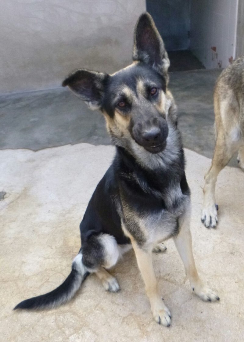 Bildertagebuch - Beki: ein klasse Mädchen mit viel Potential zum guten Familienhund!  - VERMITTELT! 31624970px