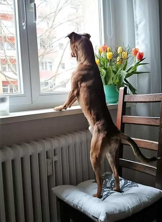 Bildertagebuch - Nacho, herziger kleiner Hundeschnuggel ...VERMITTELT! 31636567ag