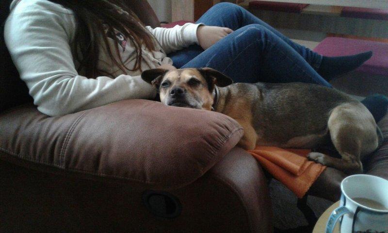Bildertagebuch -  Ivy (jetzt Maja): eine kleine Hundelady hofft - VERMITTELT! 31696832yg