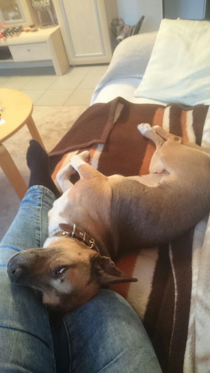 Bildertagebuch -  Ivy (jetzt Maja): eine kleine Hundelady hofft - VERMITTELT! 31696839jc