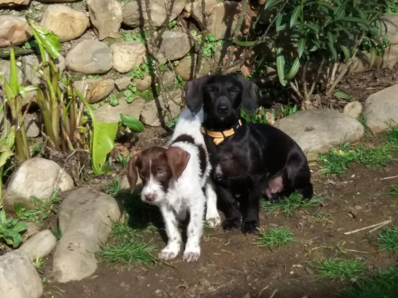 Bildertagebuch - BETH, kleiner Dackelmix liebt Menschen und Tiere - ZUHAUSE in SPANIEN GEFUNDEN! 31697885ir