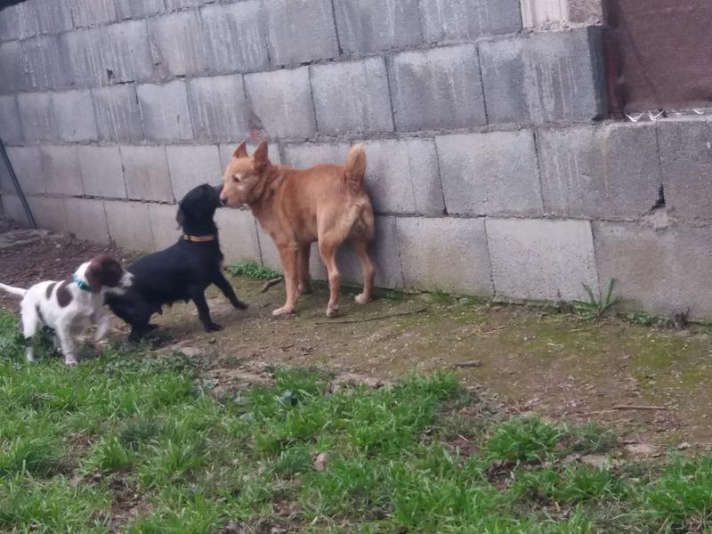 Bildertagebuch - BETH, kleiner Dackelmix liebt Menschen und Tiere - ZUHAUSE in SPANIEN GEFUNDEN! 31697892zz