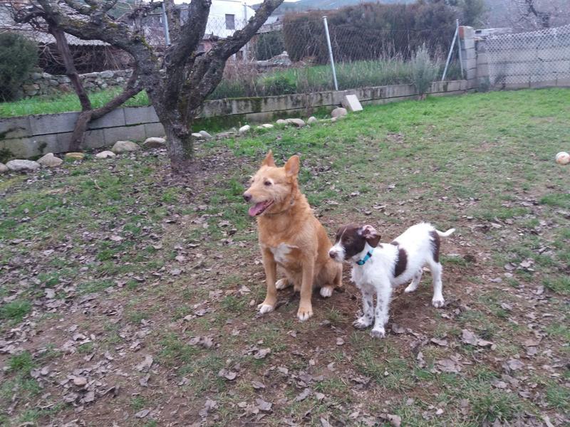 Bildertagebuch - BETH, kleiner Dackelmix liebt Menschen und Tiere - ZUHAUSE in SPANIEN GEFUNDEN! 31697905xc