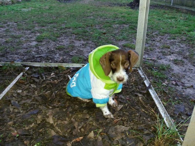 Bildertagebuch - BETH, kleiner Dackelmix liebt Menschen und Tiere - ZUHAUSE in SPANIEN GEFUNDEN! 31697920hk