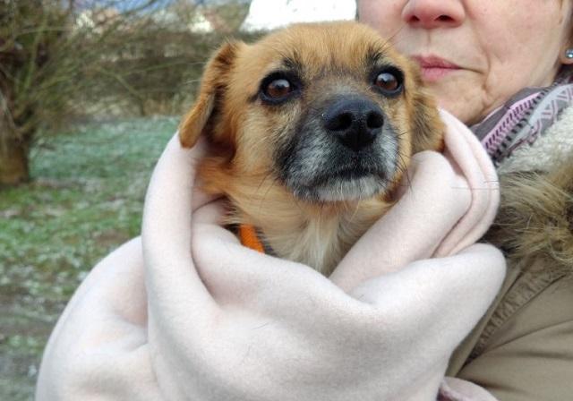 Bildertagebuch - Roslyn, eine kleine Zaubermaus, die der Hundehölle entkommen ist - VERMITTELT! 31736510aq