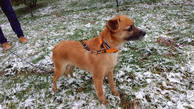 Bildertagebuch - Roslyn, eine kleine Zaubermaus, die der Hundehölle entkommen ist - VERMITTELT! 31736511hc