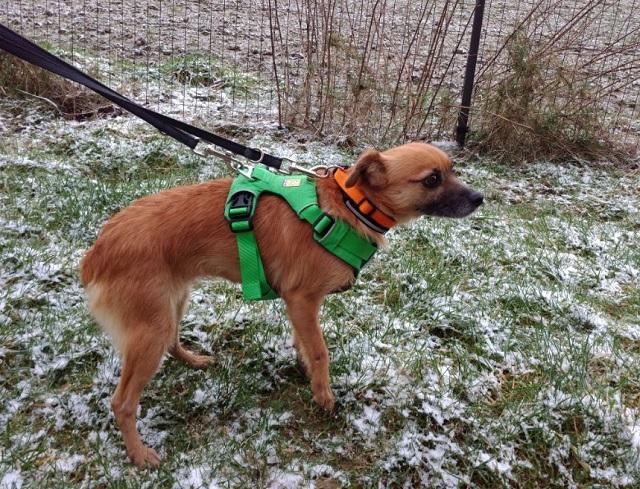 Bildertagebuch - Roslyn, eine kleine Zaubermaus, die der Hundehölle entkommen ist - VERMITTELT! 31736512de