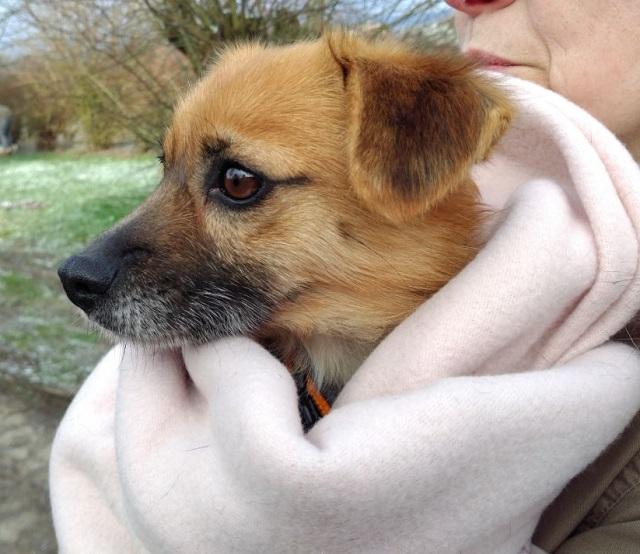 Bildertagebuch - Roslyn, eine kleine Zaubermaus, die der Hundehölle entkommen ist - VERMITTELT! 31736513bc