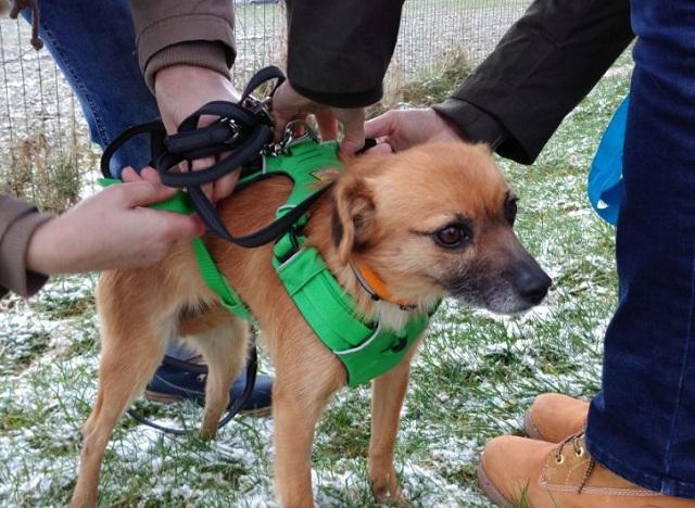 Bildertagebuch - Roslyn, eine kleine Zaubermaus, die der Hundehölle entkommen ist - VERMITTELT! 31736515vm