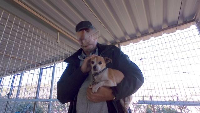 cooper - Bildertagebuch - COOPER darf als Dauerpflegehund auf seiner Pflegestelle bleiben 31759743km