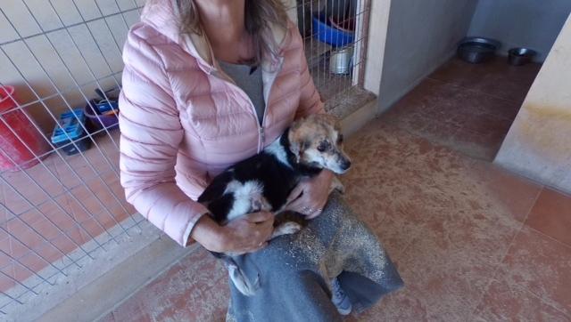 cooper - Bildertagebuch - COOPER darf als Dauerpflegehund auf seiner Pflegestelle bleiben 31759744hi