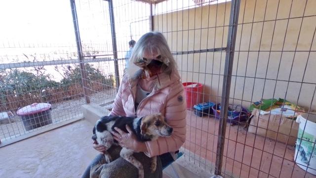 cooper - Bildertagebuch - COOPER darf als Dauerpflegehund auf seiner Pflegestelle bleiben 31759745eg