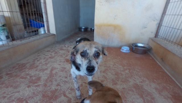cooper - Bildertagebuch - COOPER darf als Dauerpflegehund auf seiner Pflegestelle bleiben 31759746lp