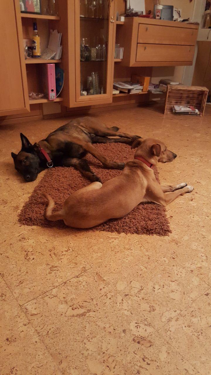 Bildertagebuch - Nugget, ein ganz süßer Hundejunge konnte gerade noch rechtzeitig vorm Ertrinken gerettet werden! - VERMITTELT! 31764594jd