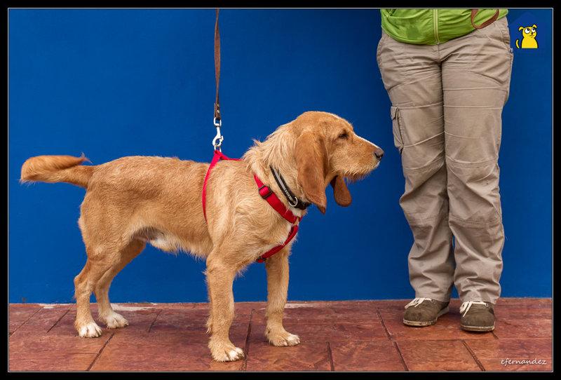Bildertagebuch - SANCHO, ein ganz besonderer Hund...VERMITTELT! 31796607jt