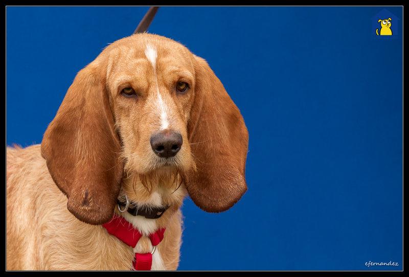 Bildertagebuch - SANCHO, ein ganz besonderer Hund...VERMITTELT! 31796608sz