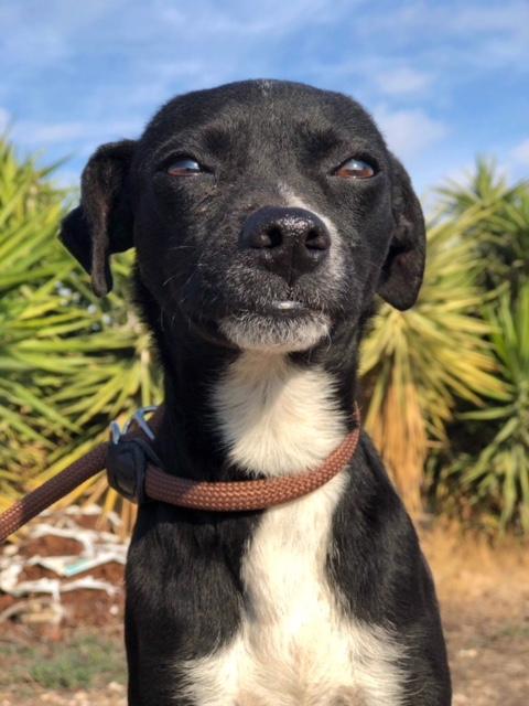 Bildertagebuch - Isla: ein zartes, kleines Hundemädchen sucht verzweifelt seine Menschen - VERMITTELT! 31804872bl