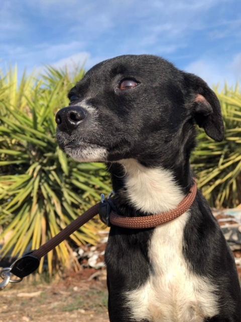 Bildertagebuch - Isla: ein zartes, kleines Hundemädchen sucht verzweifelt seine Menschen - VERMITTELT! 31804873cm