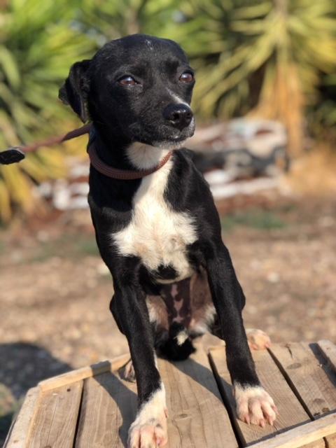 Bildertagebuch - Isla: ein zartes, kleines Hundemädchen sucht verzweifelt seine Menschen - VERMITTELT! 31804874oc