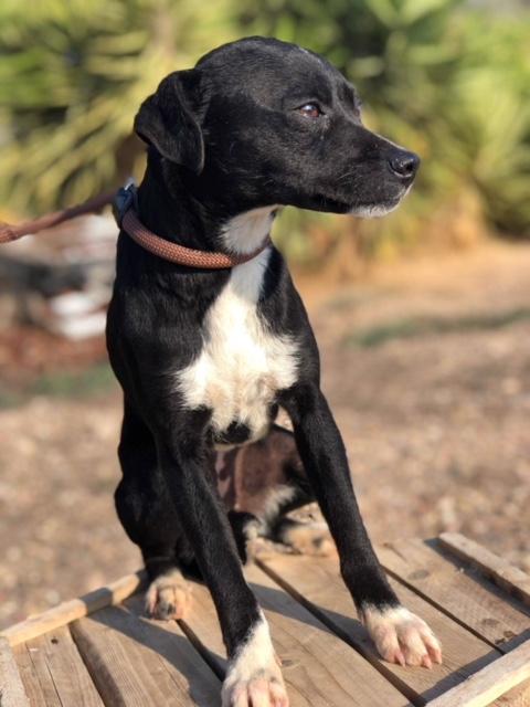 Bildertagebuch - Isla: ein zartes, kleines Hundemädchen sucht verzweifelt seine Menschen - VERMITTELT! 31804876kd
