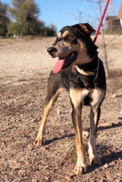 Bildertagebuch - DASHER, eine Knutschkugel in Hundegestalt - VERMITTELT - 31828717df