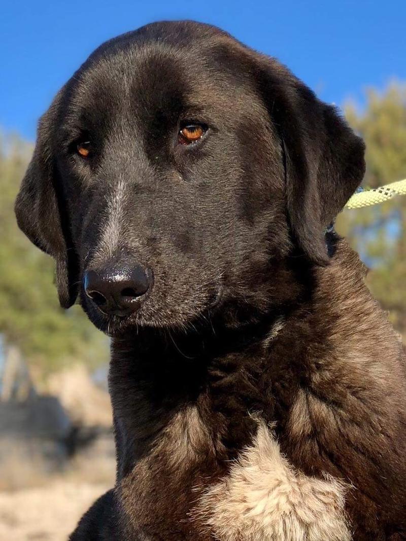 Bildertagebuch - IONA, großes, flauschiges Mädchen in der Farbe eines Wolfes - VERMITTELT! 31892814ar