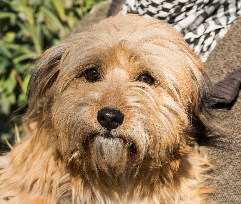Bildertagebuch - Strubel, entzückendes Hundemädchen war ganz allein unterwegs...VERMITTELT! 31930631ck