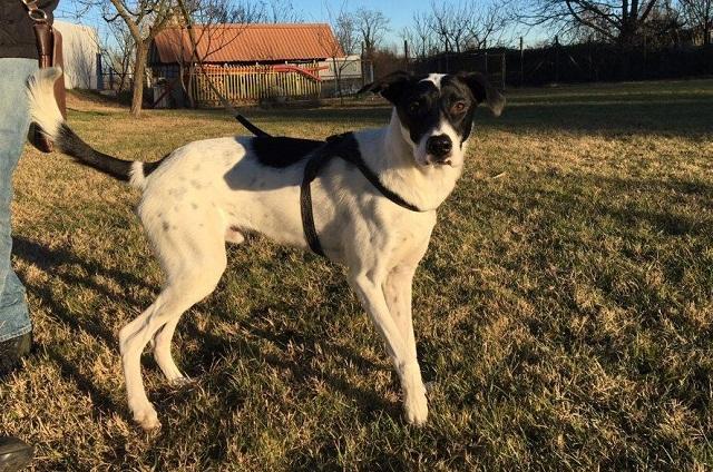 Bildertagebuch - Pippo, ein Traumhund sucht Traumzuhause! - in ITALIEN VERMITTELT! 32115459uy