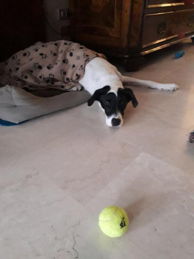 Bildertagebuch - Pippo, ein Traumhund sucht Traumzuhause! - in ITALIEN VERMITTELT! 32115462ip