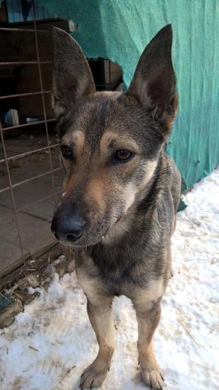 Fancsi Monor lebt glücklich in Ungarn 32152810et