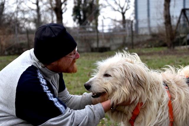 Bildertagebuch - OSCAR, junger Maremmanorüde sucht Herdenschutzhund-Zuhause...VERMITTELT! 32155264dj