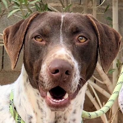 Bildertagebuch - Guiness: ein Hundekumpel fürs Leben - VERMITTELT - 32230064dg