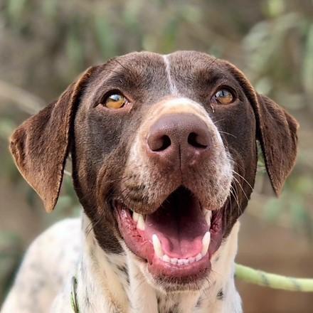 Bildertagebuch - Guiness: ein Hundekumpel fürs Leben - VERMITTELT - 32230066fq