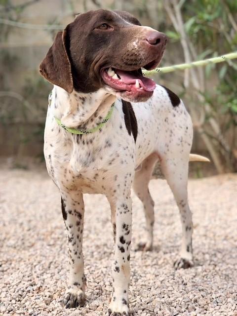 Bildertagebuch - Guiness: ein Hundekumpel fürs Leben - VERMITTELT - 32230069fi