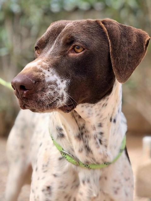 Bildertagebuch - Guiness: ein Hundekumpel fürs Leben - VERMITTELT - 32230080mf