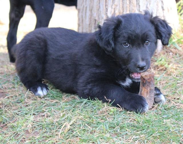 Bildertagebuch - Niam, witziger Hundejunge auf der Suche nach seiner Familie - ZUHAUSE IN SPANIEN GEFUNDEN! 32249172rx