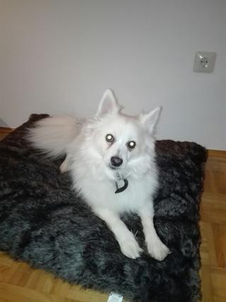 Chello lebte glücklich in Österreich! 32329495uv