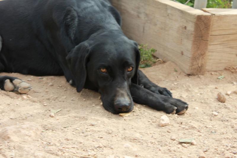 Bildertagebuch - TIMON, junger und aufgeweckter Hund - VERMITTELT! 32360302rh