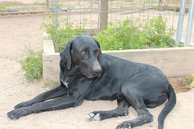 Bildertagebuch - TIMON, junger und aufgeweckter Hund - VERMITTELT! 32360308rx