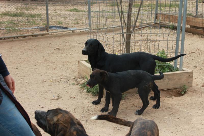 Bildertagebuch - TIMON, junger und aufgeweckter Hund - VERMITTELT! 32360311zo