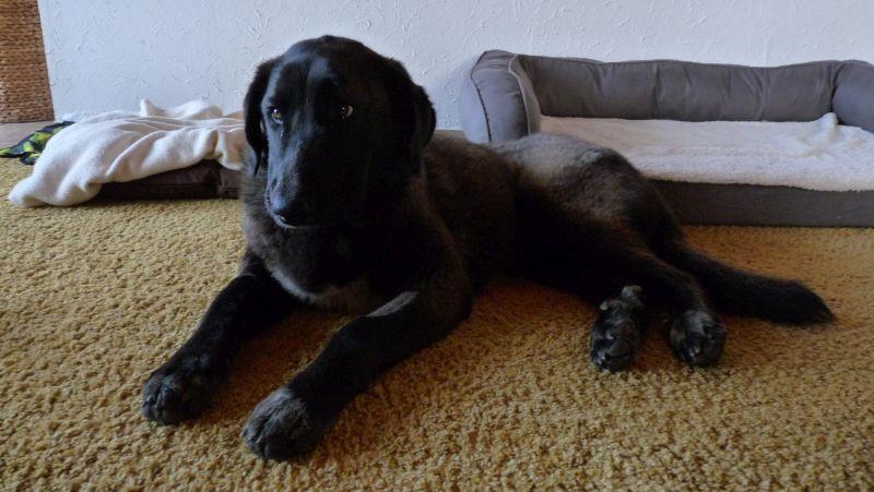 Bildertagebuch - IONA, großes, flauschiges Mädchen in der Farbe eines Wolfes - VERMITTELT! 32414446ka